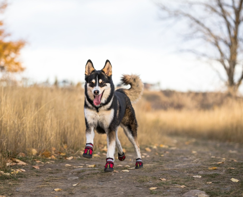 Dog trail boots