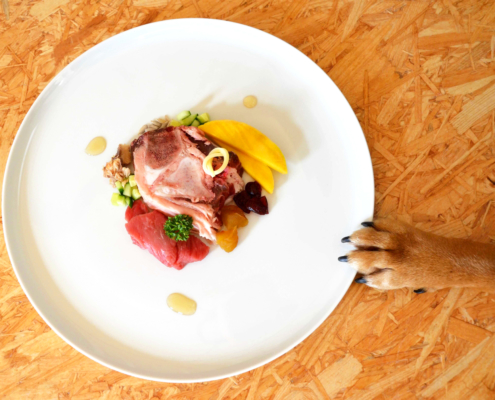 Gastronomic dinner of a dog provided by Dog Concierge