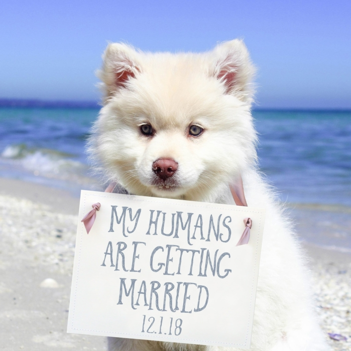 White puppy holding a sign for the wedding of his humans getting married